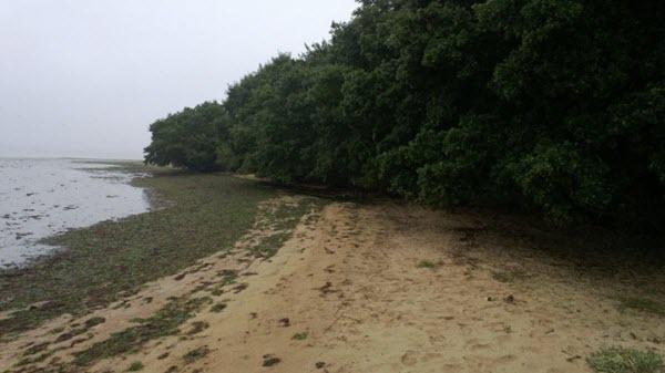 castaway_beach